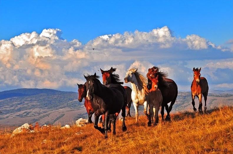 konji-krug